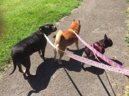 Dog walking, Dog Sitting and Behavioral Training in the CBD