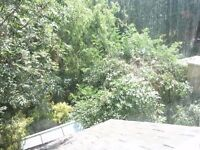 Views of the private wooded garden from this secluded room. 100mg B.B. :-) share. Grt Facils Parking