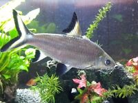 Tropical Fish Clearance - Sharks pack