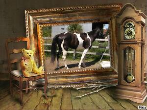 2 Magnifiques Paint Horse 1 Mâle 1 Femelle yeux bleus Saguenay Saguenay-Lac-Saint-Jean image 3