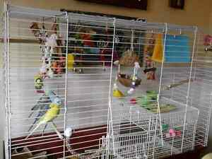 WANTED: BUDGIE LOVER! :)