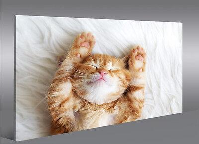 owler Katze Kater Kätzchen 1K Leinwandbild Wandbild Poster (Kätzchen Poster)