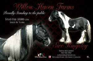 Gypsy Vanner Stud Service - Clydesdale, Drum, Shire