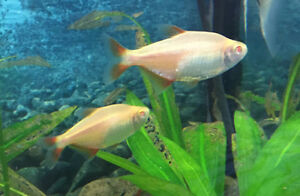 Healthy young fish ready for rehoming