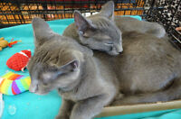 VOLUNTEERS NEEDED FOR PURRFECT HAVEN CAT RESCUE FUNDRAISER