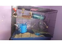 4 male dumbo rats plus large cage
