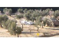 Land/Business Sale Spain Due To Death