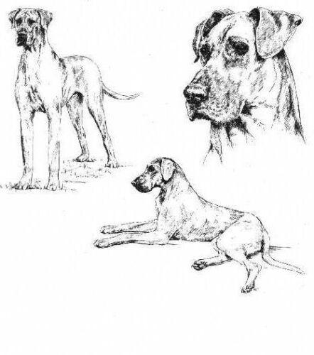 Great Dane - 1963 Vintage Dog Print - Matted