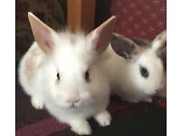 Two baby bunnies