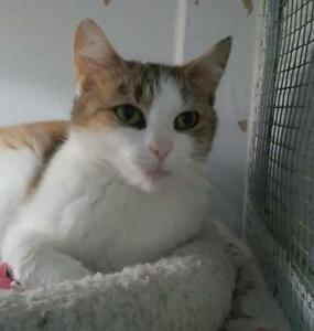 "Young Female Cat - Calico-Tabby: ""Mallory"""