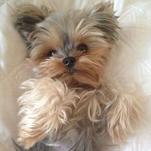 Pension familiale exclusif pour petit chien ( 10 lbs max )