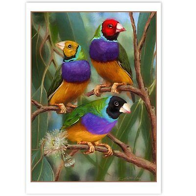 © ART - Australian Gouldian Finch Wildlife Bird Original nature print by Di