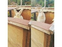 Gorgeous female bunny rabbit looking for a new loving home
