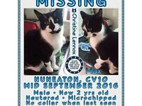 Max is a black and white cat missing from Coventry : CV10 mid Sept 2016. he is micro-chipped