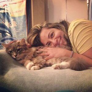 cat visit care gardienne d'animaux plateau vieux mtl verdun