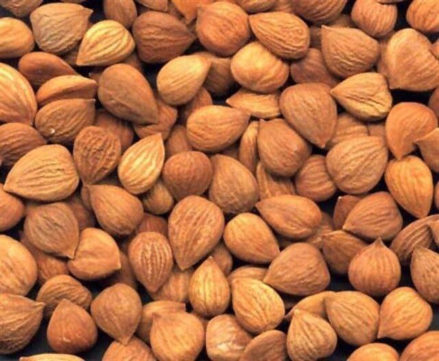Bittere Aprikosenkerne Ernte 2018 Vitamin B 17 Nicht behandelt