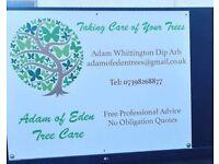Tree surgery across Devon and Cornwall