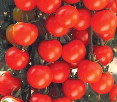 Sweet Baby Girl Tomato Seeds - Sweet Girl
