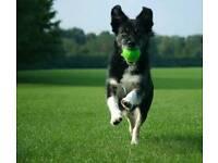 Dog walker, Dog walking, Home Boarding, Pet sitting