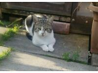 Missing tabby tom cat