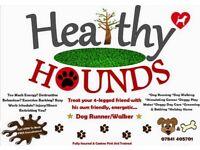 Dog walker/Doggie daycare