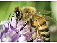 Honey bees wanted