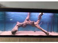 Large aquarium root/wood!