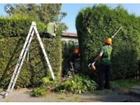 Does your garden need a tidy up trees hedges fencing work FORGET THE REST WE ARE THE BEST