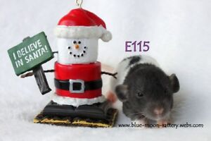 BLMR has 2 dumbo baby female rats available Dec 23
