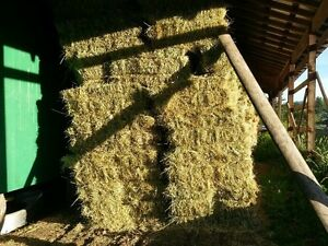 Grass Hay for sale