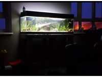 4ft Long fish tank and stand