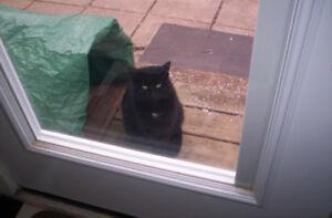 FOUND BLACK CAT DUNDAS