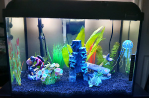30 gallon aquarium