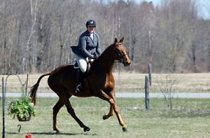 Fall Riding Lessons Booking Now Adults Children Sat Horse Club