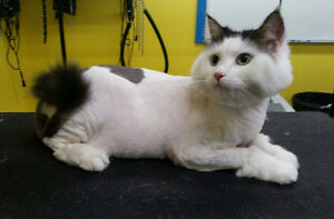 CAT GROOMING in your home! St. John's Newfoundland image 2