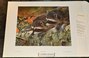 Carl Brenders Double Trouble raccoon unframed