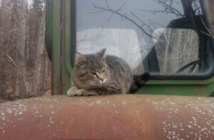 Lamont Area Young Cat Found