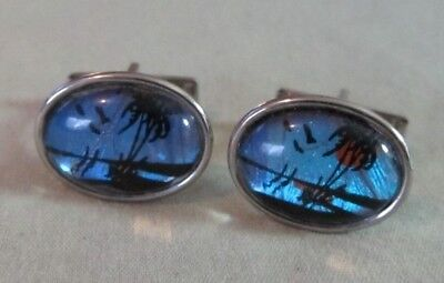 Mens Vintage TROPICAL SUNSET BUTTERFLY CUFFLINKS Costume Jewelry (Mens Butterfly Costume)
