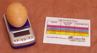 Digital Egg Scale Incubator Scale Measure Humidity Poultry-chicken-quail-duck