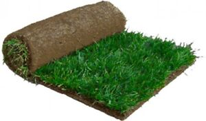 Looking to purchase about 4 rolls of sod