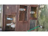 Rabbit/ gunieapig/ chicken coop