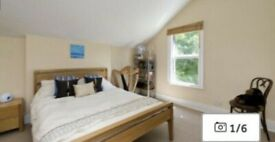 Spacious One Bed room Flat to Rent in Dagnall Park SE25