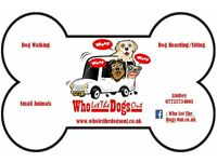 Professional Dog Walking and Home Boarding