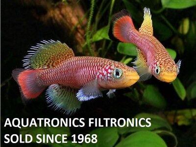 aquatronics_filtronics