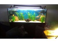 5ft tank stand