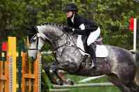English Horse Training and Coaching
