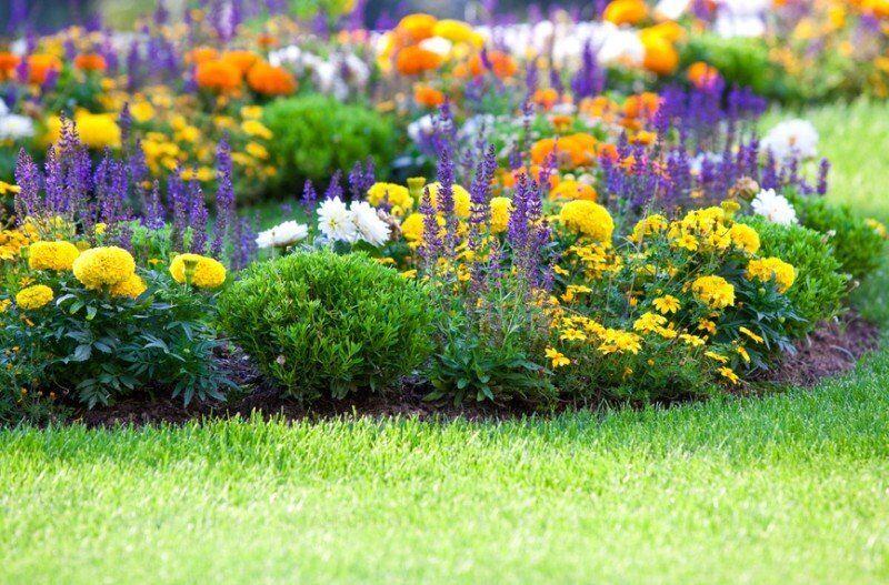 Allium Gardening Services