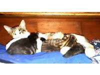 Three gorgeous kittens for sale