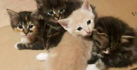 Kittens ALL SOLD