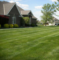 GRASS CUTTING AS LOW AS $20